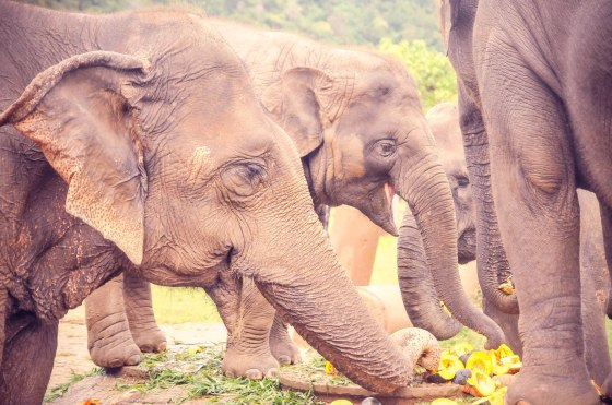Northern Thailand: Loi Krathong Festival in Chiang Mai & Elephant ...
